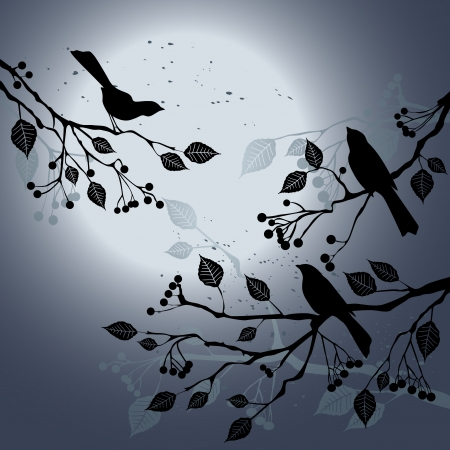 night bird: Birds on the branch during summer Illustration