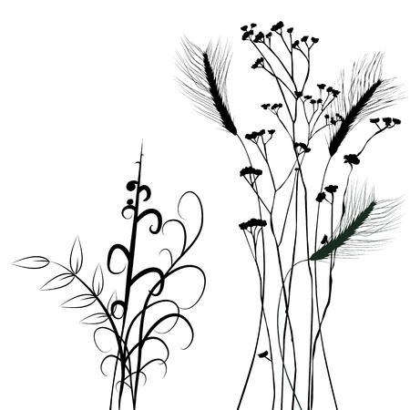 wheat grass: Collection for designers, plant vector - set