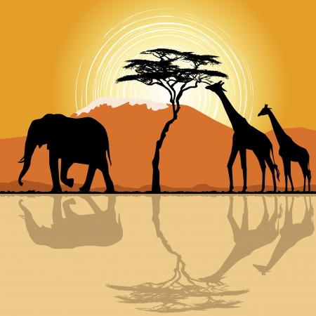 wildlife preserve: African landscape  in sunset time with giraffes and elephant.