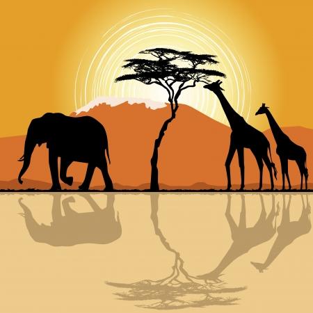 ilustraciones africanas: Paisaje africano en la puesta del sol con las jirafas y los elefantes. Vectores