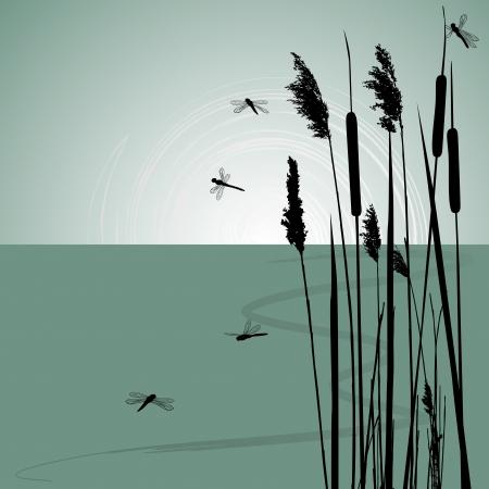 canne: Reeds in acqua e libellule pochi