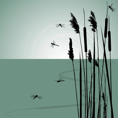marsh plant: Reeds in the water and  few dragonflies