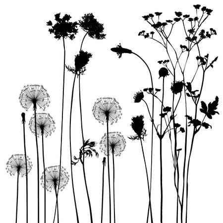 collectie, voor ontwerpers, plant