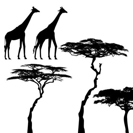 African animals, giraffe, vector silhouettes