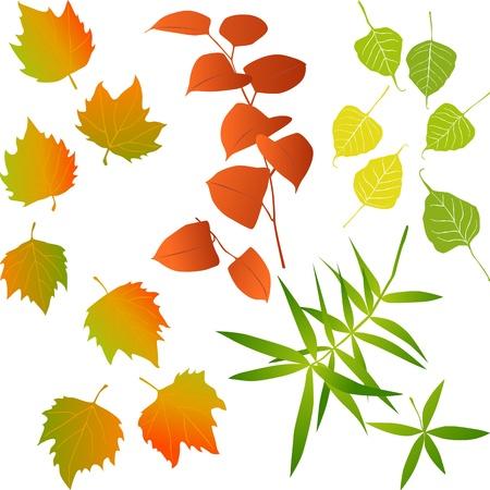 aspen: Leaf, collection for designers