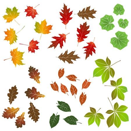 aspen: Autumn leaf, collection for designers