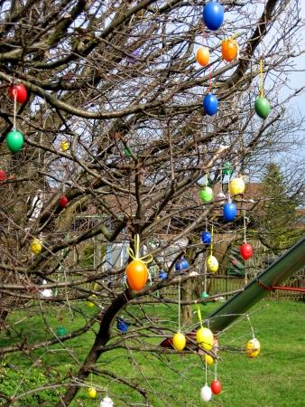 arbol de pascua: Algunos colourfull huevos de Pascua que cuelgan en las sucursales