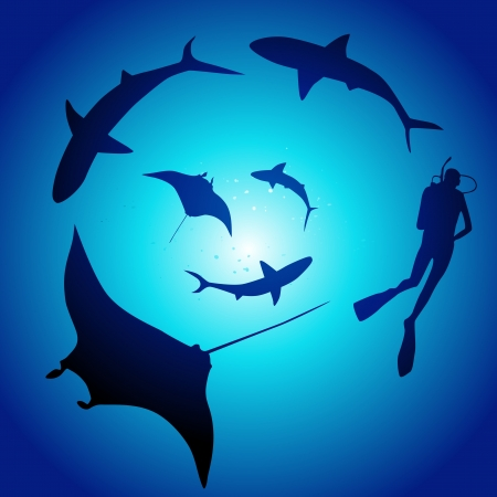 free diver: Shark and diver, swimming with sharks
