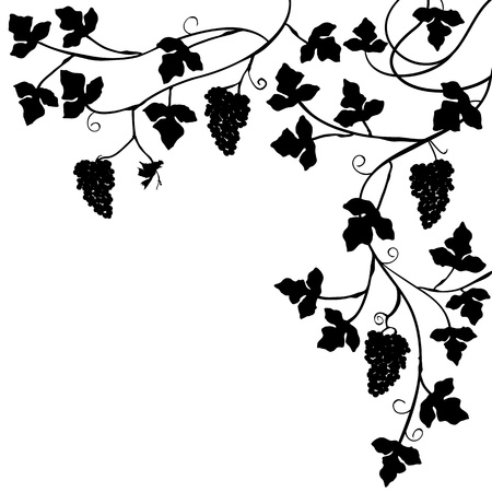 black branch: Bunch of grapes, plant background