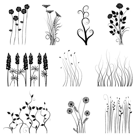 acacia tree: collection for designers, plant vector