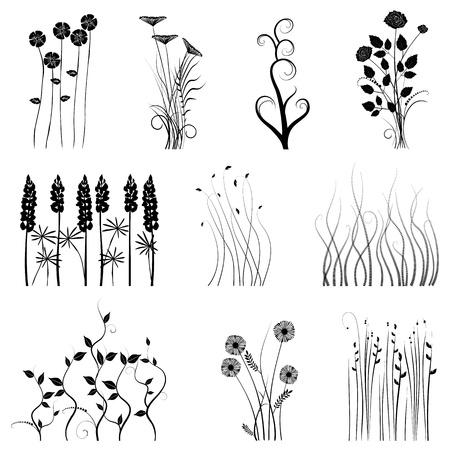 crecimiento planta: vector colecci�n de los dise�adores de la planta, Vectores