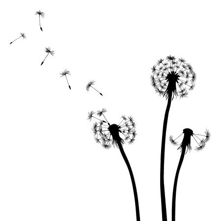 canne: Floral background, tarassaco Vettoriali