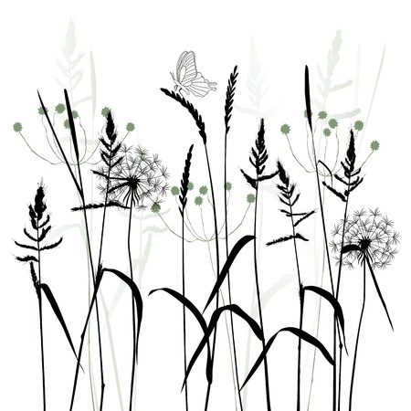 herb garden: The Meadow In Summertime plant  Illustration