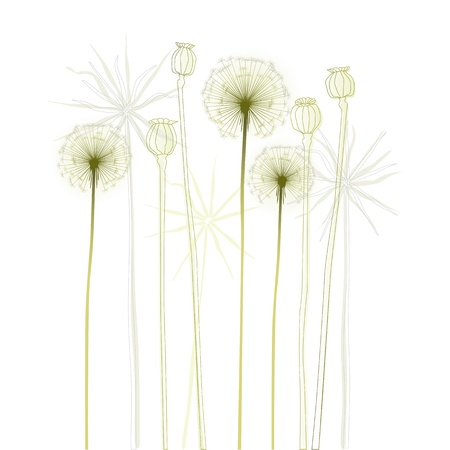 poppy leaf: Floral background, dandelion  The meadow in summertime - 2d Illustration