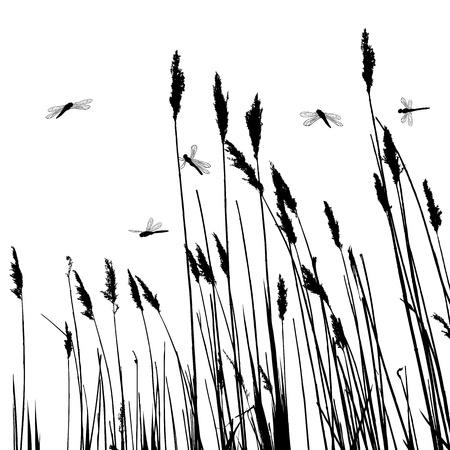 canne: Silhouette erba vera e pochi libellule - vettore