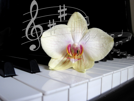 Piano keys with a flower and notes of, musical background  photo