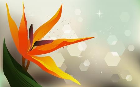 desktop wallpaper: Fondo floral, Strelitzia - fondo de escritorio