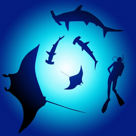 Shark and diver, swimming with sharks Vector