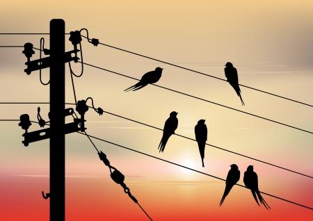 migraci�n: La migraci�n de las aves de fondo con las aves, y el espacio para el texto Vectores