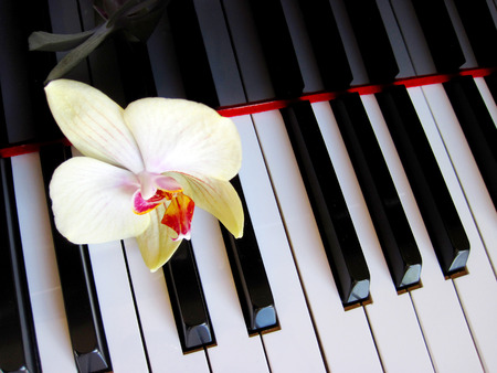 Piano keys with a flower, musical background