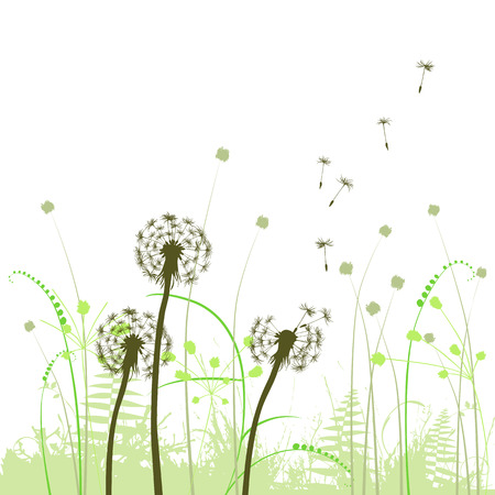 abstract background with dandelions Vector