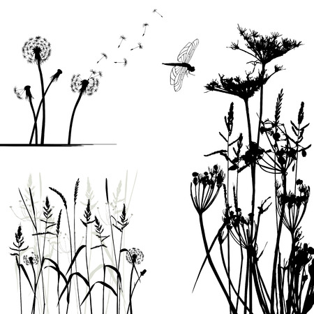 Collection for designers, wild plant vector Vector
