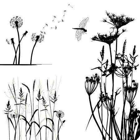 fleurs des champs: Collection pour les concepteurs, vecteur de plantes sauvages Illustration