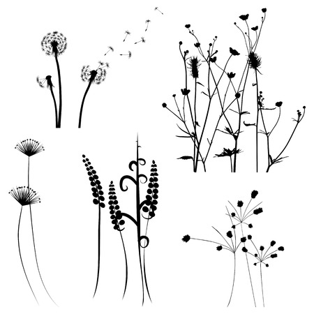 for designers: Collection for designers, meadow in summertime, plant vector set