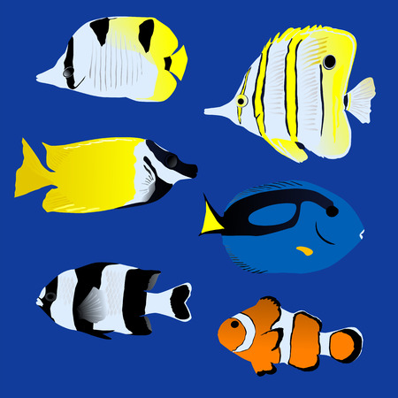 plunging: Great tropical fish collection on blue background, vector illustration Illustration