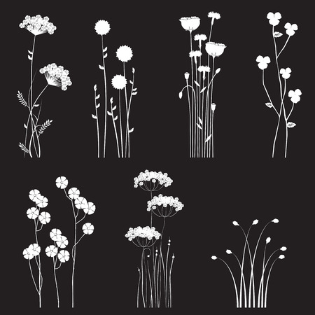 Blooming wild flowers separated on a black background - collection for designers
