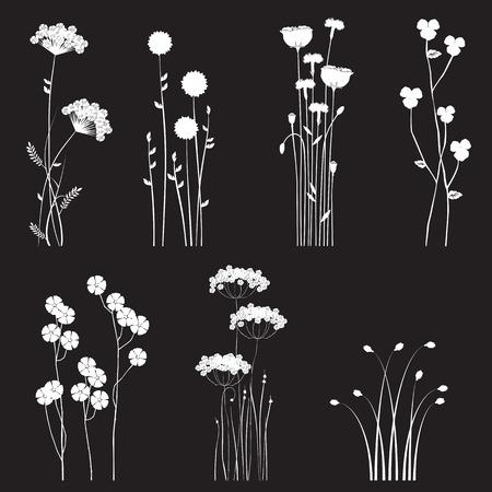 fiordaliso: Blooming fiori selvatici separati su sfondo nero - raccolta per i progettisti Vettoriali