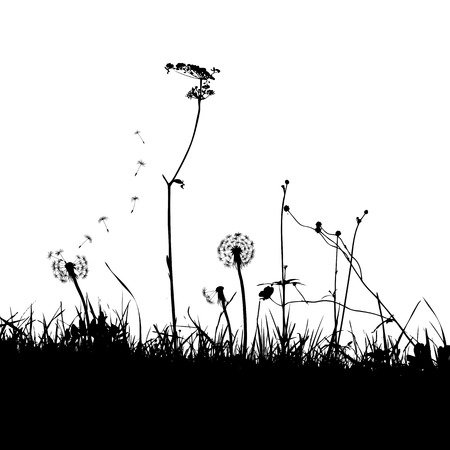 weeds: The Background with Dandelions and Weeds