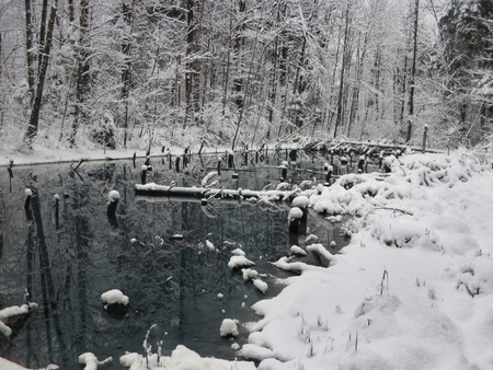 snow forest: A lake in the forest with snow along the banks. Piding, Germany