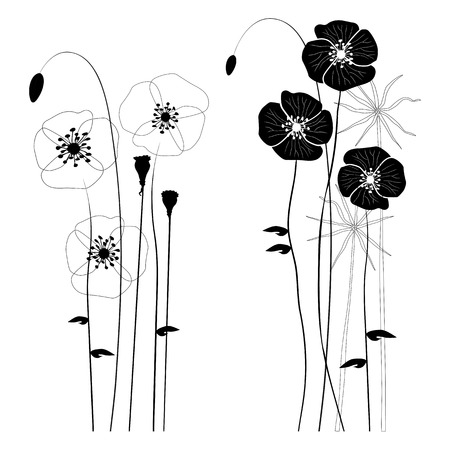 Set of wild plants, poppies and dandelions Illustration