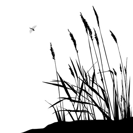 Reed and flying dragonfly during sunny day - illustration. Wild live Ilustração