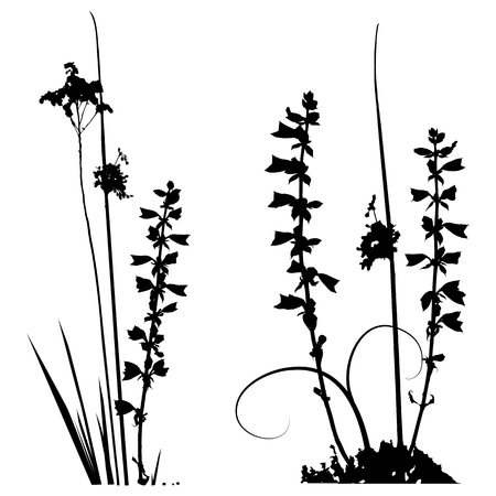 twiggy: Black and white Traced plants silhouettes collection for designers