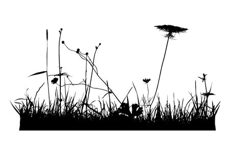 Real plant traced silhouettes, poppy.  Meadow during summertime - vector illustration,