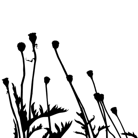 traced: Real plant traced silhouettes, poppy.  Meadow during summertime