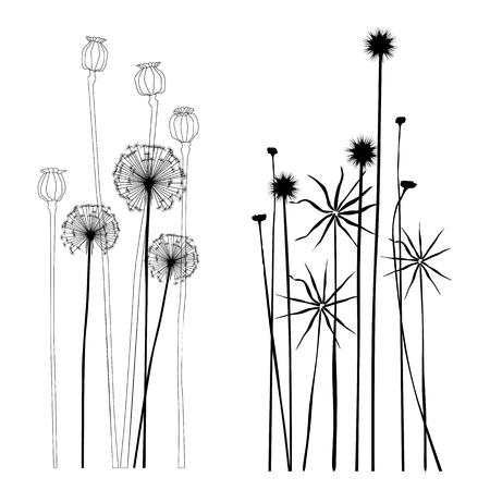 Set of wild plants, poppies and dandelions Çizim