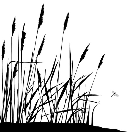 リードと晴れた日のベクトル図の中に飛んでいるトンボ。野生に住んでいます。