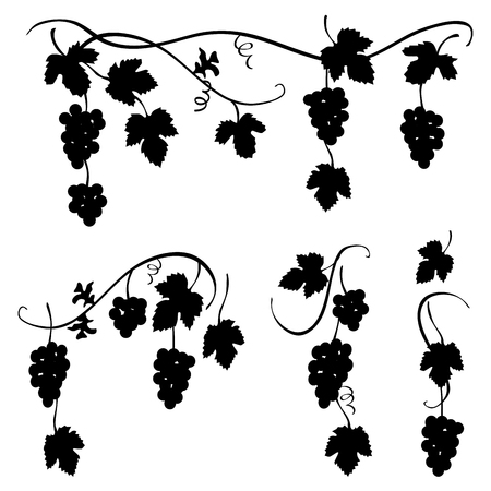 Bunch of grapes - set of few decorative elements for designers, black and white vector illustration