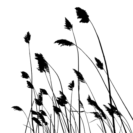 real reed silhouette - vector illustration - traced two colors white and black Ilustração Vetorial
