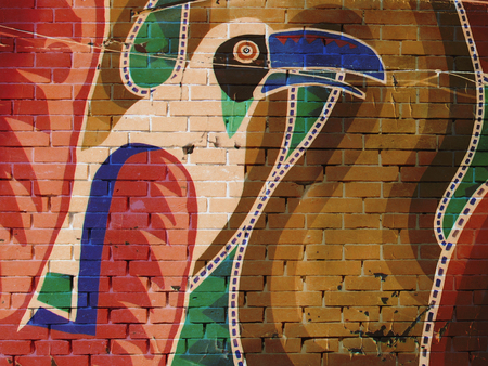 Grunge wall covered in graffiti, Toucan, snake
