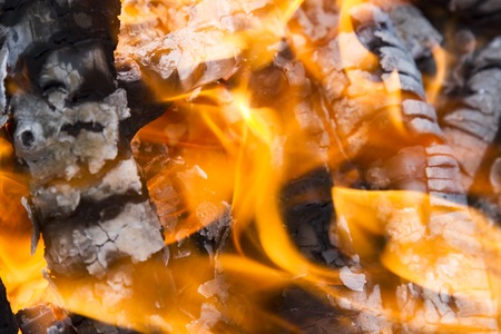 kale: Fire in the oven