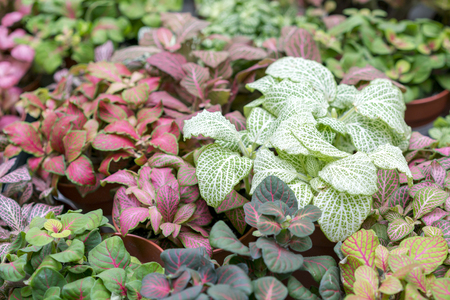 Colorful ground cover plants. Stock Photo