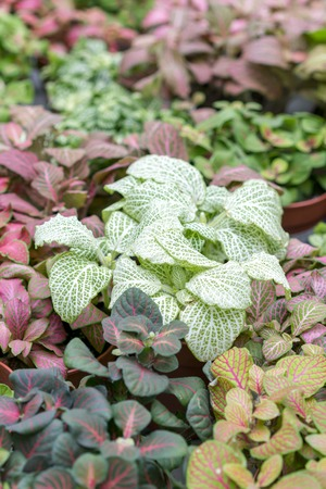 Ground cover plants. Plants with colorful leaves.