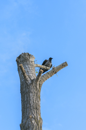 the raven sits on a fallen tree against the blue sky.