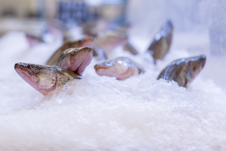 pike perch in the ice in the store.