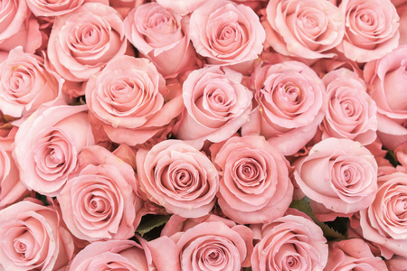Background of pink orange and peach roses. Fresh pink roses. A huge bouquet of flowers. The best gift for women.