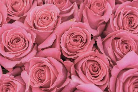 Achtergrond van roze en perzik rozen. Verse roze rozen. Een enorm boeket bloemen. Het beste cadeau voor vrouwen.
